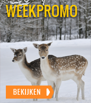 WeekPromo